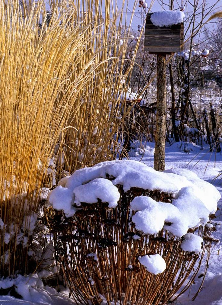 Grasses and sedum heads in the snow - Photo by Jerry Pavia - Arts & Crafts Homes and the Revival
