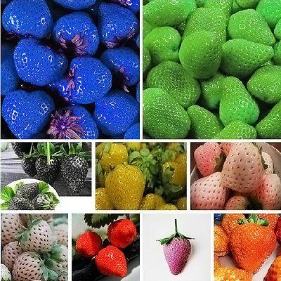 100 PCS Strawberry Seeds Nutritious Delicious Blue Black Fruit Vegetables New