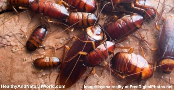 How To Get Rid Of Water Bugs Roaches Naturally