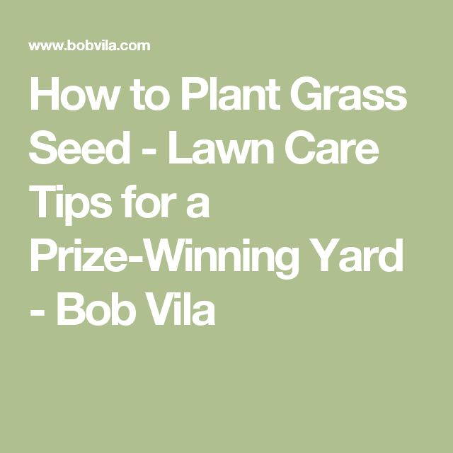 How To Plant Grass Seed   Lawn Care Tips For A Prize Winning Yard