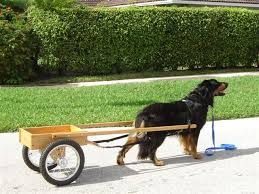 r sultat de recherche d 39 images pour chien carriole carrioles chiens pinterest. Black Bedroom Furniture Sets. Home Design Ideas