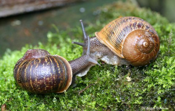 Awww. Lonely mutant snail finds love with matchmaker's help     - CNET  Enlarge Image  Jeremy gets acquainted with Lefty.                                             Angus Davison                                          Jeremy is a common brown garden snail with a twist. His shell spirals anti-clockwise as compared with the clockwise spiral of almost all of his kin making him an outlier in a world of right-coiled snails. With a little help and lot of love Jeremy now has a perfect match…