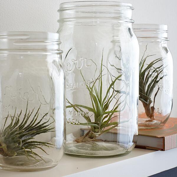 Plantas en jarros.