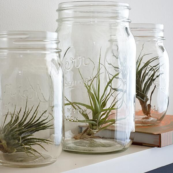 Small Water Garden Needs No Electricity Just Place Pots: 17 Best Images About Tillandsia On Pinterest
