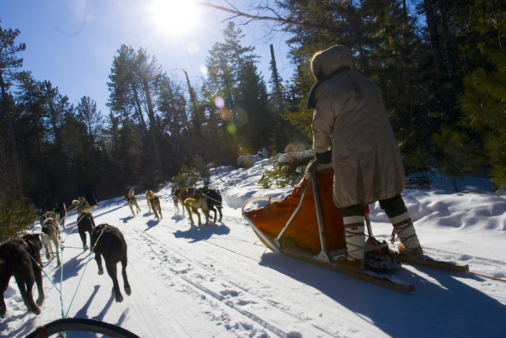 Heading off into the sun.: Sled Dogs, Dogs Sled, Sled Trips, Shared Sled