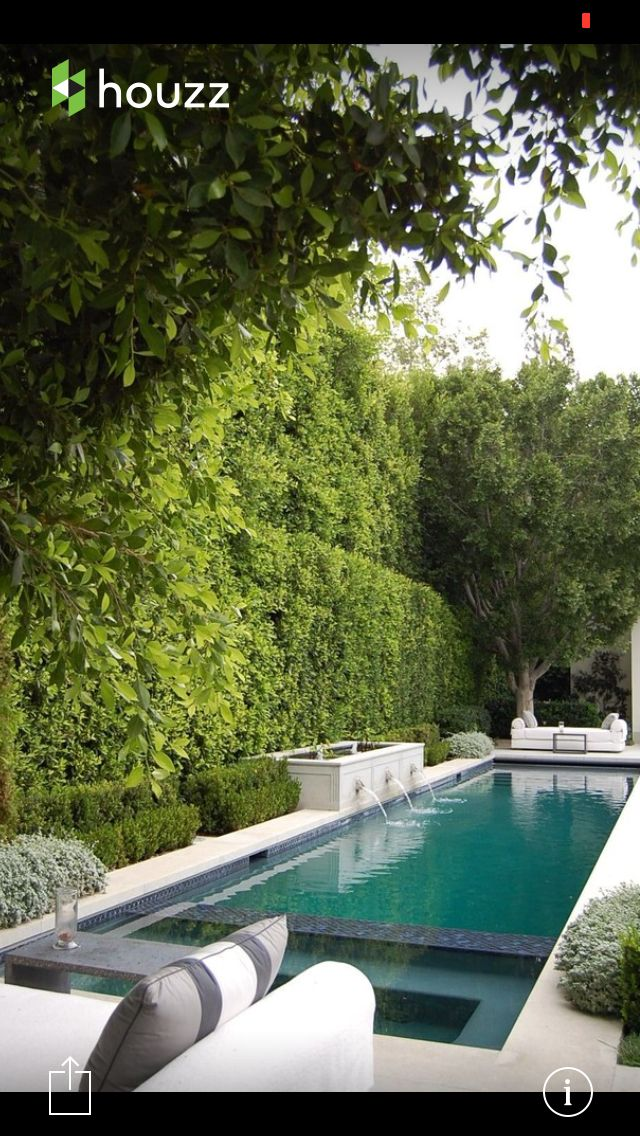 17 Best Images About Pool Privacy Ideas On Pinterest Backyards Dumpster Pool And Evergreen