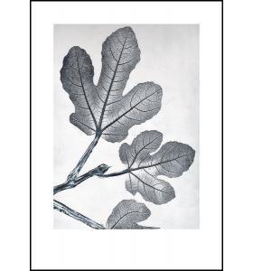 Pernille Folcarelli - Fig Bluegrey 50x70