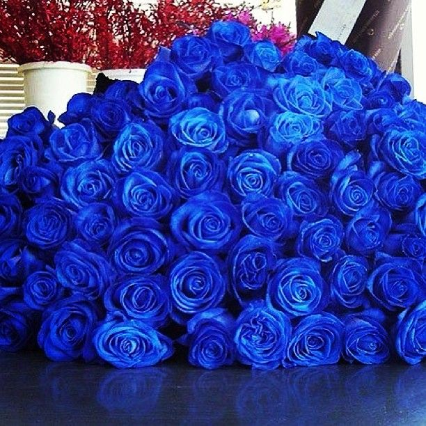 25 best ideas about blue roses on pinterest roses