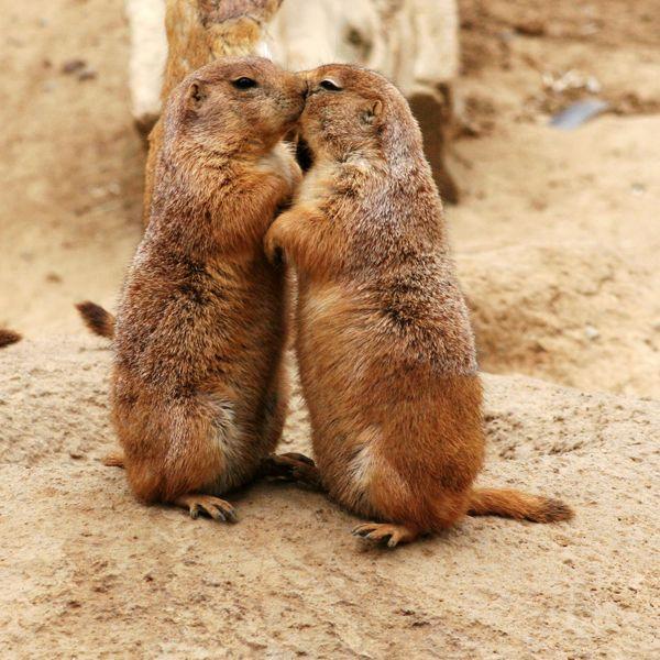 Cute animal hugs