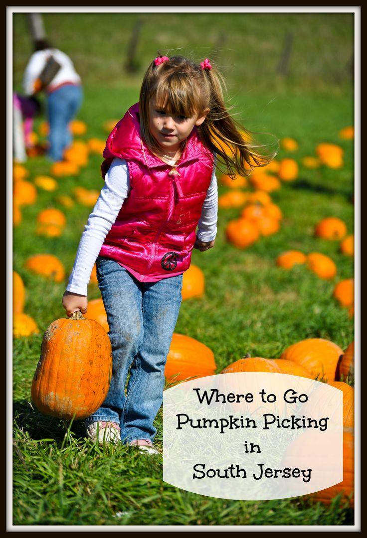 Pumpkin Picking in Southern New Jersey | Things to Do In New Jersey | #nj #newjersey #southjersey #farms #pickyourownpumpkins #pumpkinpicking #pumpkins #hayrides #fieldtrips