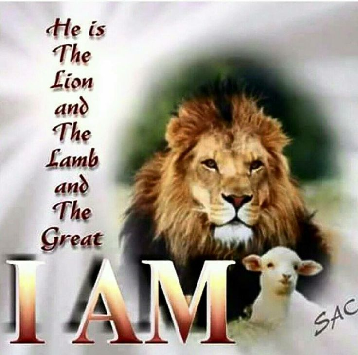 He's The Lion Of The Tribe Of Judah