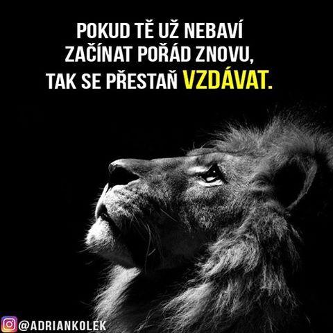 Pokud tě už nebaví začínat pořád znovu, tak se přestaň vzdávat. #motivace #uspech #motivacia #adriankolek #business244 #czech #slovak #czechgirl #czechboy #motivation #business #success #dream #lion #lifequotes #life #goals