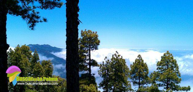 Pico Bejenado (El Paso- La Palma) Foto Moisés Pérez García