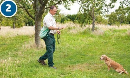 Easy Dog Training Dogtrainingrevolution Positive Dog Training