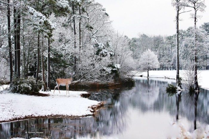 12 Majestic Spots In North Carolina That Will Make You Feel Like You're At The North Pole