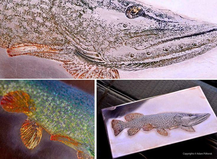 #fish #AdamPoltorak #copperplate