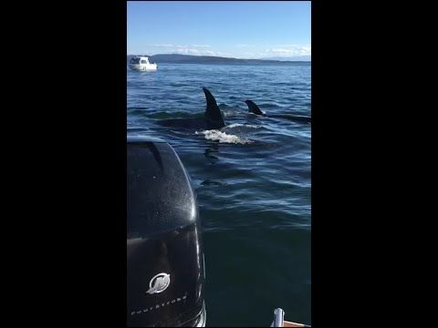 adventure journal – Seal Jumps in Boat to Escape Hungry Orcas
