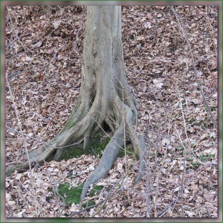 """Als ik vandaag in het verloren bos aan kom krijg ik niet veel tijd om stil te staan, Munch de eekhoorn staat me ongeduldig op te wachten. Hij springt opgewonden op en neer en roept """"Kom je m"""