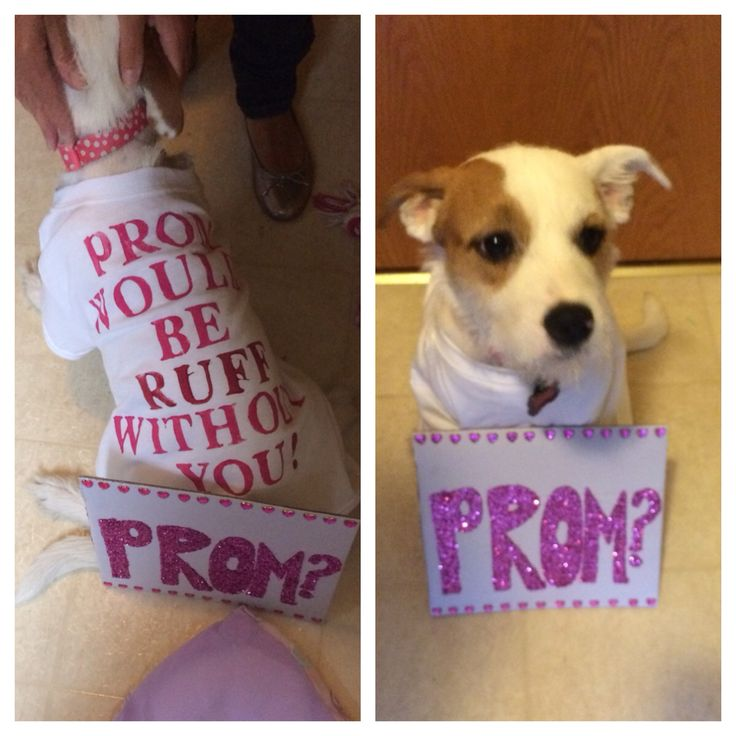 Proposal Ideas Using Pets: #prom #promposals #puppy