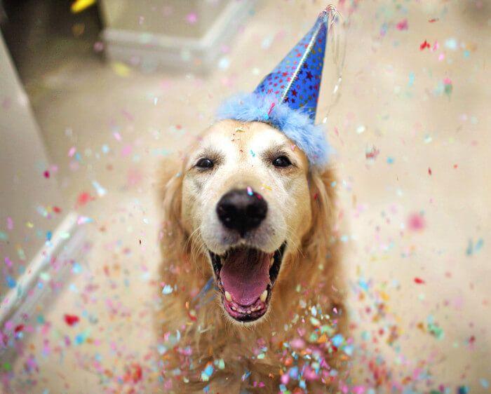 Pasos para organizar un cumpleaños para perros perfecto