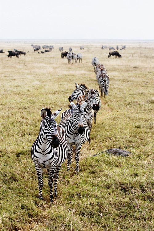 Ngorongoro Crater, Tanzania, Africa