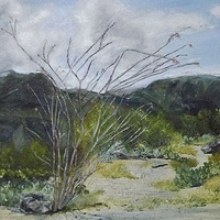 Ocotillo Cactus  Oil On Canvas, 30 X 25cm   Ocotillo Cactus on the Apache trail Arizona USA,