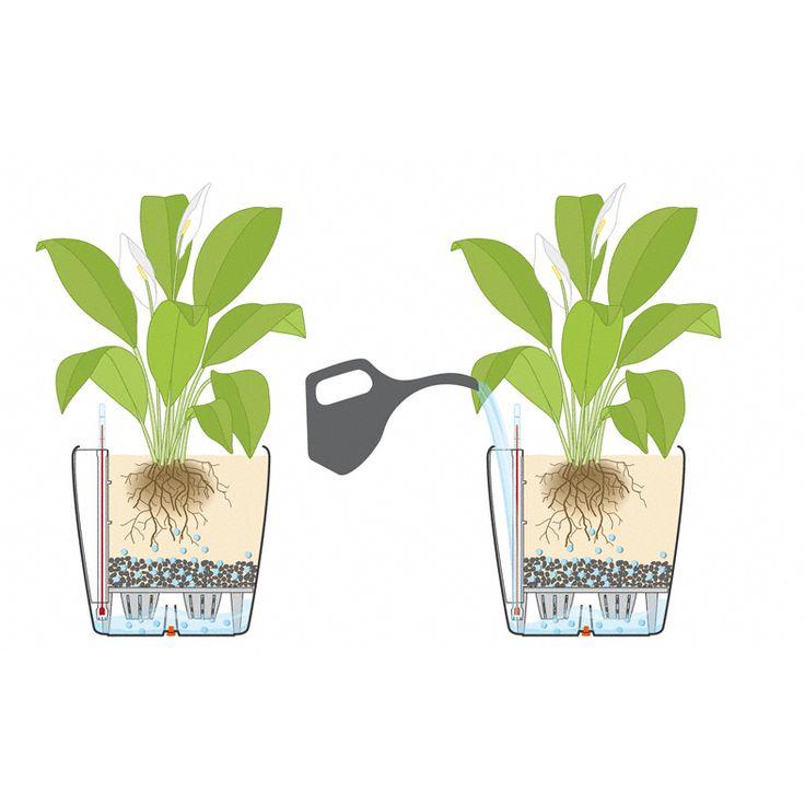 Элементарный полив растений