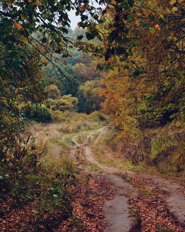 По дороге домой я бредила лесом. Из окна поезда были видны такие замечательные пейзажи, что хотелось бродить где-то там в далеке, отбросив все плохие мысли, и наслаждаться этой долгожданной свободой... Удивительно, но на следующий же день мы всей семьей поехали за грибами, и там я наконец-то насытилась природой. Сейчас, вспоминая это, я все больше убеждаюсь, что сидеть осенью в городе просто самоубийство.  #vsco #vscocam #vscorussia #vscogood #vscomood #vscogram #Russia #осень #autumn…