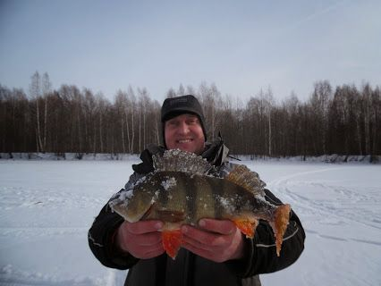 Клуб рыбаков. Рыбалка. Club fishermen. fishing– Сообщество– Google+  Трофейный окушок, Волга