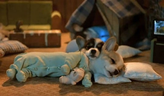 Corgis in pajamasSleep Dogs, Sleepy Time, Little Puppies, Slumber Parties, Night Night, Sweets Dreams, Corgis Puppies, Nighties Night, Animal