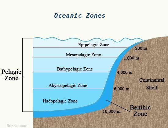 Benthic and Pelagic Zones