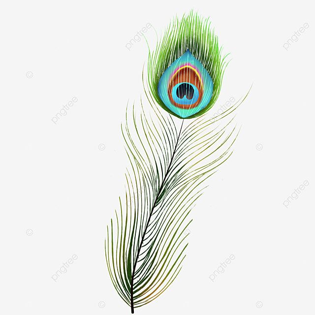 Green Peacock Feather Animal Peacock Feather Png Transparent Clipart Image And Psd File For Free Download Peacock Feather Art Card Art Feather Background