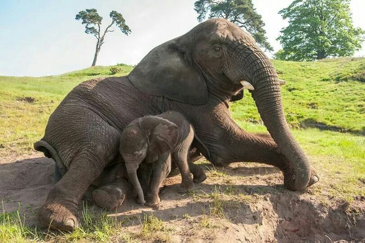 Nature S Miracle Babies Elephants