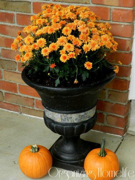 Planting for Fall Decor