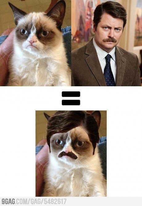 Grumpy cat Ron Swanson