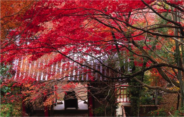 7 redenen om minstens 1x in je leven naar Japan te gaan - Kersenbloesem zover je kunt kijken, openbaar vervoer dat zonder uitzondering stipt op tijd rijdt,verwarmde toiletbrillen, theedrinken als absolute kunstvorm: Japan is verre van een doorsnee vakantiebestemming. High-tech en eeuwenoude cultuur wisselen elkaar in het land …