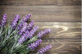 Indoor Lavender Plant Care