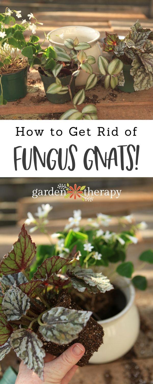 2164 best Garden Therapy images on Pinterest   Gardening ...