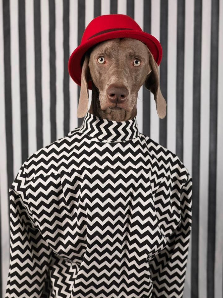 "Downtown Doggy Man.  MAN ABOUT TOWN ""DOGGY STYLE"" WILLIAM WEGMAN, STYLE BY SAMUEL FRANCOIS"