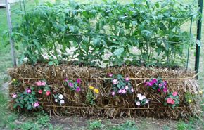Planting annuals in the sides also makes the garden look attractive as well as productive. I can't wait to get my straw bales all planted.