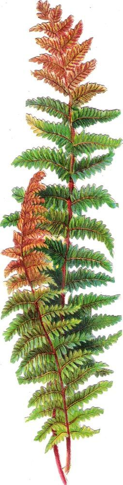 Oblaten Glanzbild scrap die cut chromo Farn 23,5cm fern Pflanze plant: