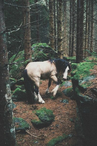 Horse turning around in the forest. Gorgeous horse!