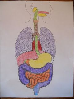Homeschooler's Resources: Apologia General Science, Module 13, The Human Digestive System