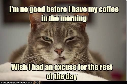 Best ideas about Feline Funnies, Cat Humor and Kitty ...