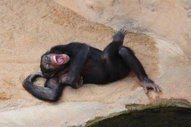 Monkey's life