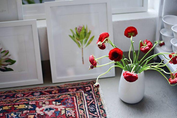 Red Ranunculus, white ceramic vase, perfection