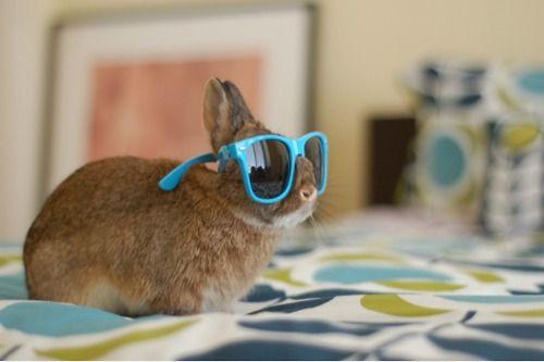 : ): Rabbit, Pet, Sunglasses Bunnies, Funny, Bright Lights, Adorable, Hipster Bunnies, Animal Photos, Bunnies Shades
