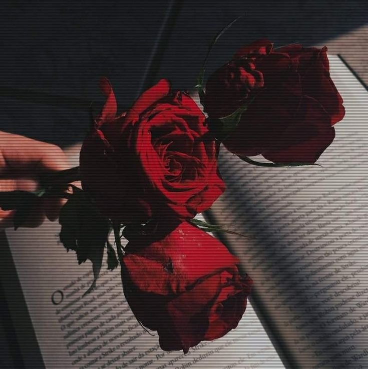 3 Roses In The Dark On The Book A Hand Holding Aesthetic
