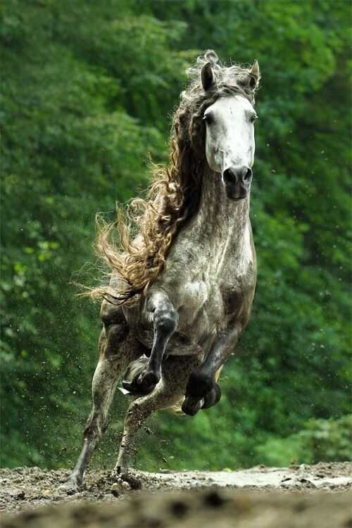 andalusian - - - Spain's most glorious gift to the world