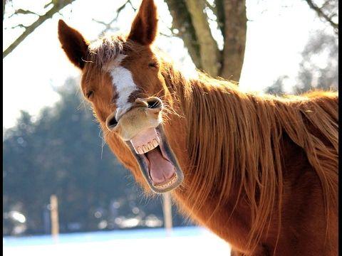 Funny Horse Videos - Cute horses playing and horseback ...